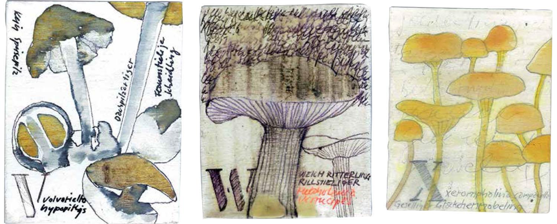 Abecedarium mycelum-8.jpg