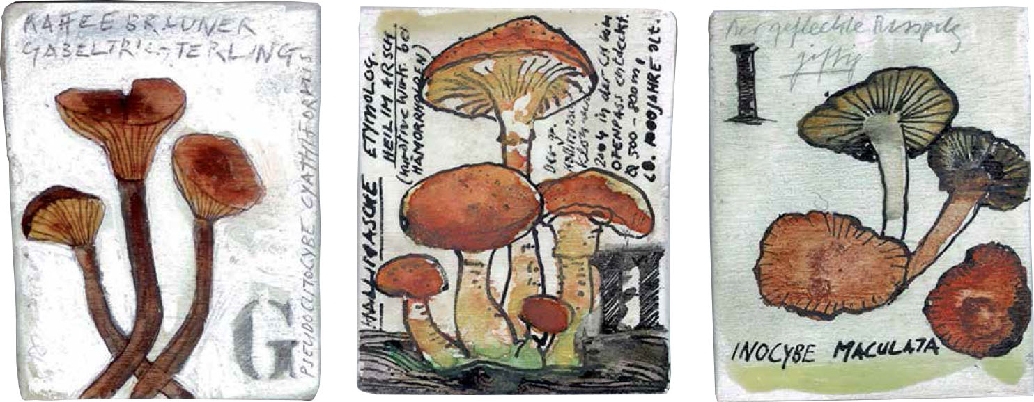 Abecedarium mycelum-3.jpg