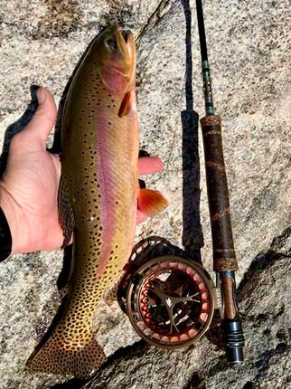 Big Golden trout taken on Winston BIIIX 490