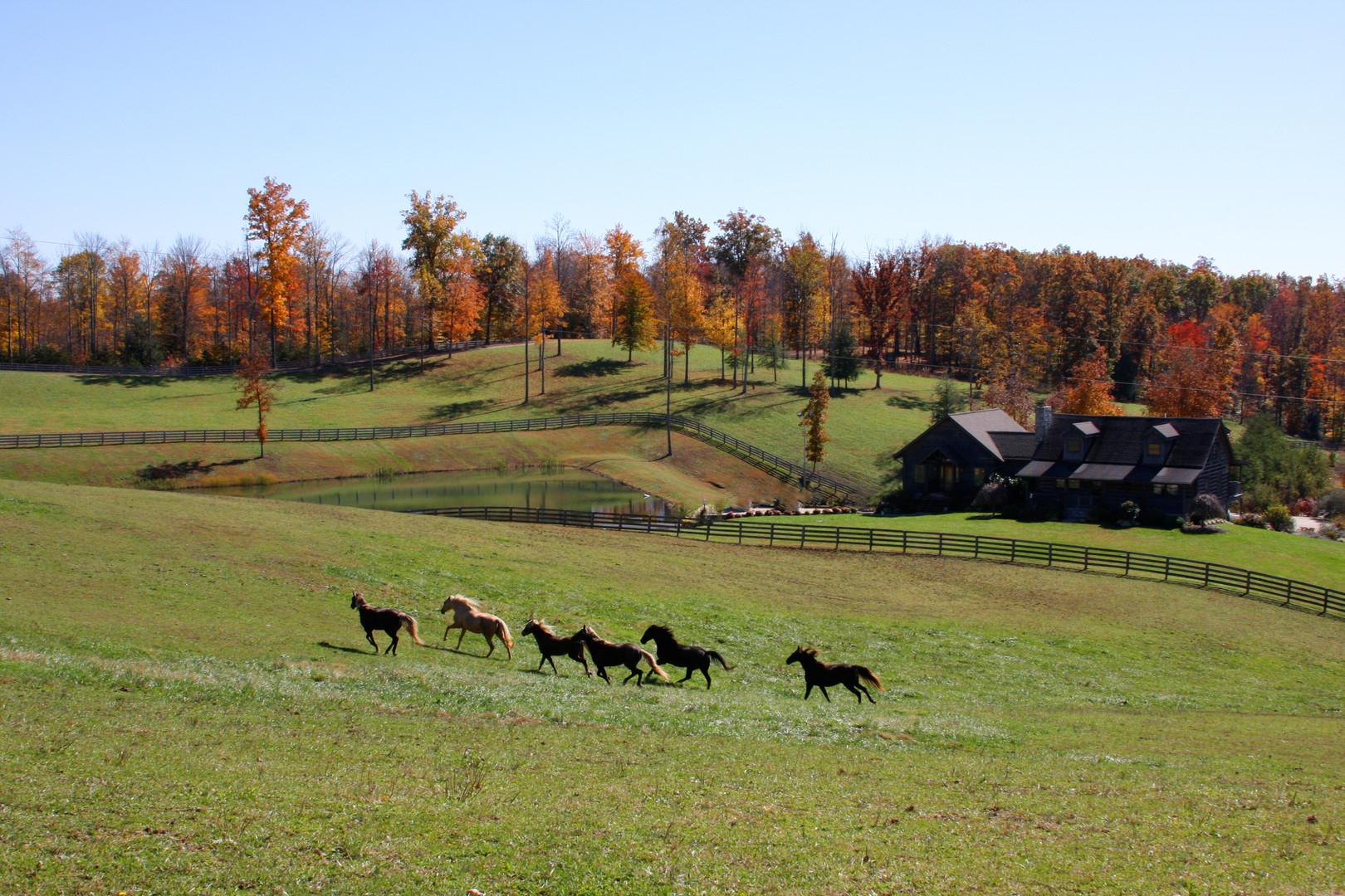 Lodge front fall horses