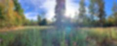 chapel cliff flowers sized.jpg