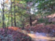 stream forest.jpg