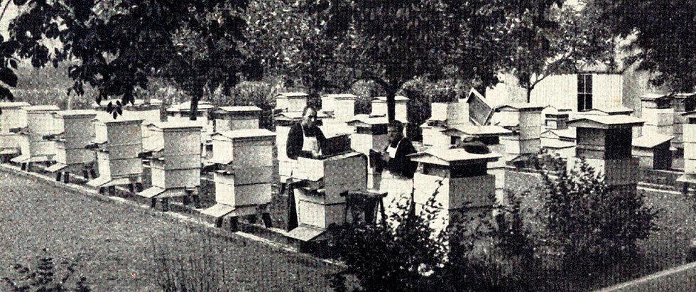 56---bee-hives.jpg