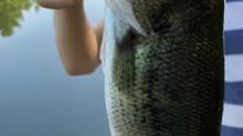 Guest Bass Fishing Blog Post