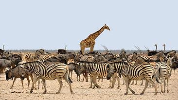 a africa zebra-1170177.jpg