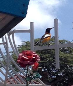 bird watching at Casa Cosmo