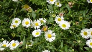 O que é Aromaterapia e como utilizar na Gestação