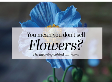 You mean you don't sell flowers?