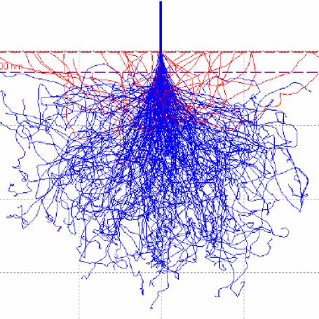 Die Monte - Carlo Simulation (2)