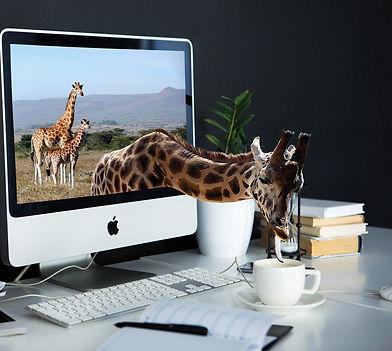 giraffe-4042654_1920_edited.jpg