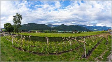 Panorama der Weinberge