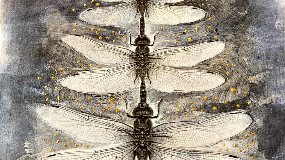 Three Dragonflies Print