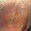 "Thumbnail: #311 17"" Amerigo Vega"