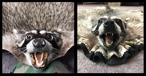 RaccoonFace.jpg