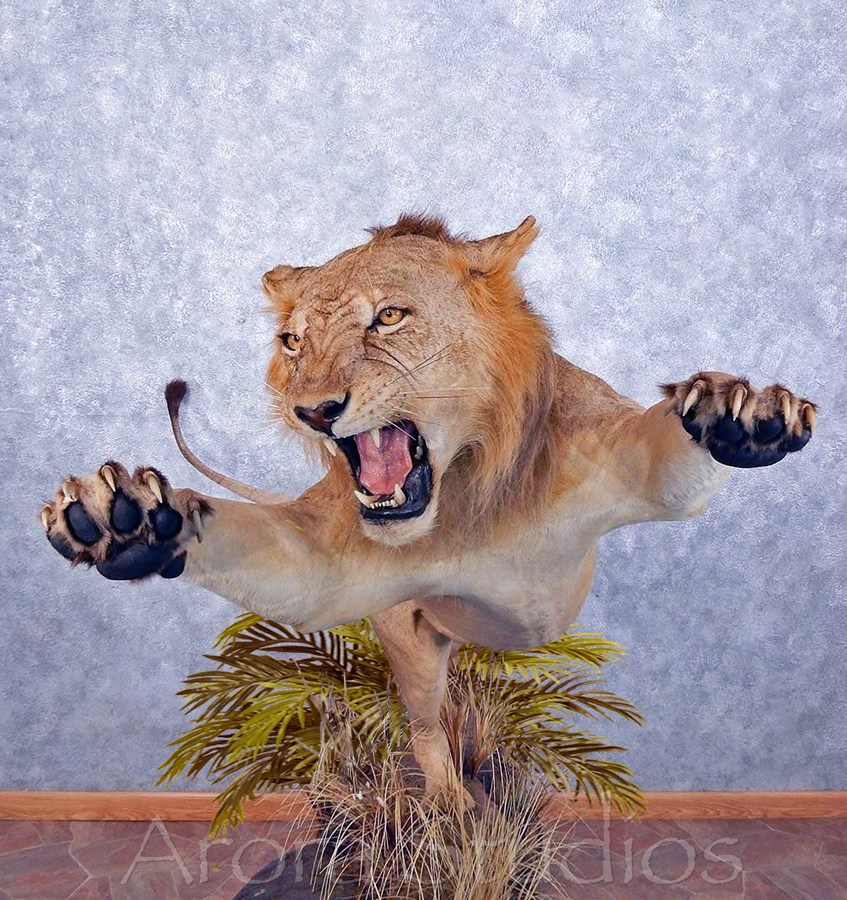 lionclose150.jpg
