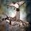 Thumbnail: 3 Beautifully Mounted Wood Ducks on Natural Drift Wood