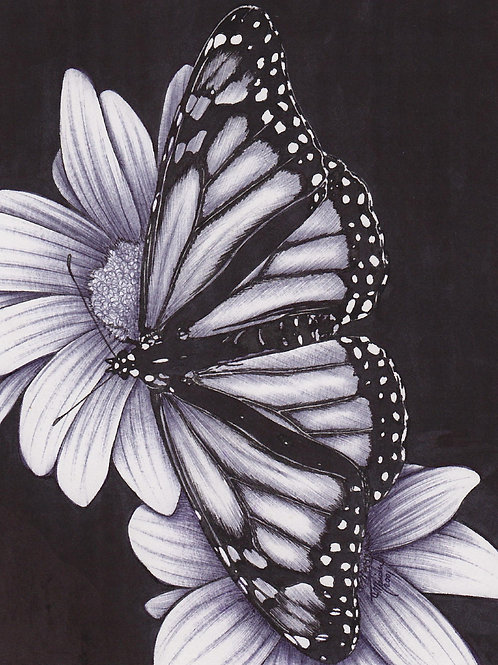 Black and White Art - Butterfly Print or Greeting Card
