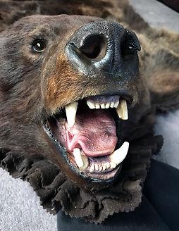 BearRugFace.JPG