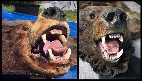 BearFace2.jpg