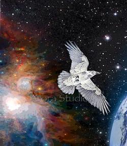 Raven Space