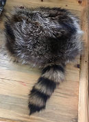 Photo of a traditional Davy Crocket style raccoon skin hat. The angle of view shows off the tail.