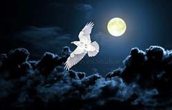 White Raven Moon