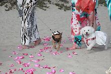 Coronado Dog Beach Weddings!