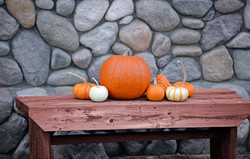 pumpkins on a bench