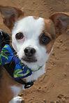 Elope to Coronado Dog Beach for a Pet Friendly Wedding!