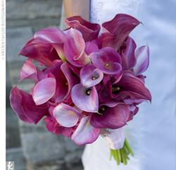 Lavender Calla