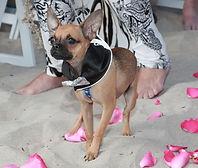 Romantic Coronado Dog Friendly Beach Elopements!