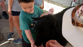 """""""All about animals week"""" at RSG"""