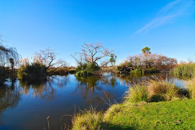 Main wetlands pond