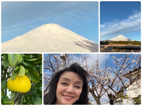 2月5日の富士山