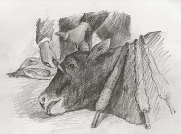 Ox drawing