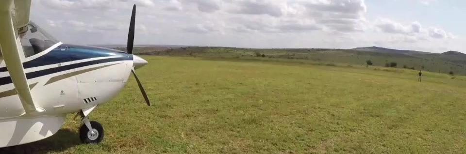 Aerial Tree Seeding