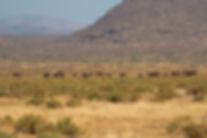 Elephant Bedroom Camp - Samburu (51).jpg