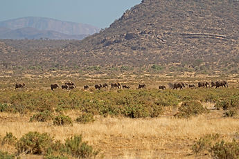 Elephant Bedroom Camp - Samburu (51).jpg