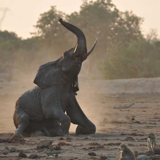 Satao Camp, Elephant playing