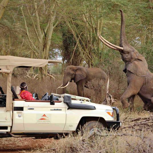 Finch Fattons elephants.jpg