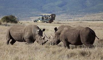 Lewa Safari Camp - Gamedrive - Rhinos.jp