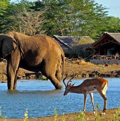 Satao Camp, Tsavo East- The wildlife around