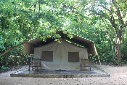 forest tent.jpg