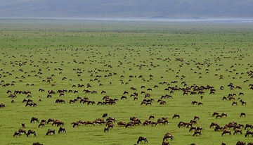 Serengeti National Park.jpg