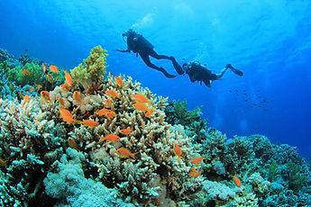 Scuba Diving in Diani