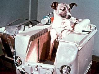 Perra Laika, primer ser vivo  en  orbitar la tierra.