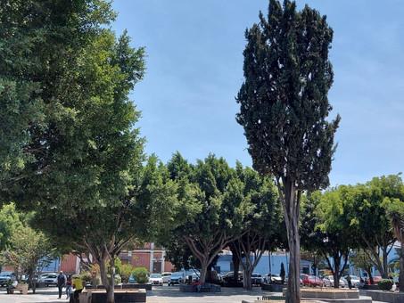 Ayuntamiento de Puebla inspecciona más de 339 árboles al mes en pro de la conservación