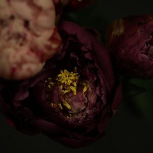 SERIE   FLOWER