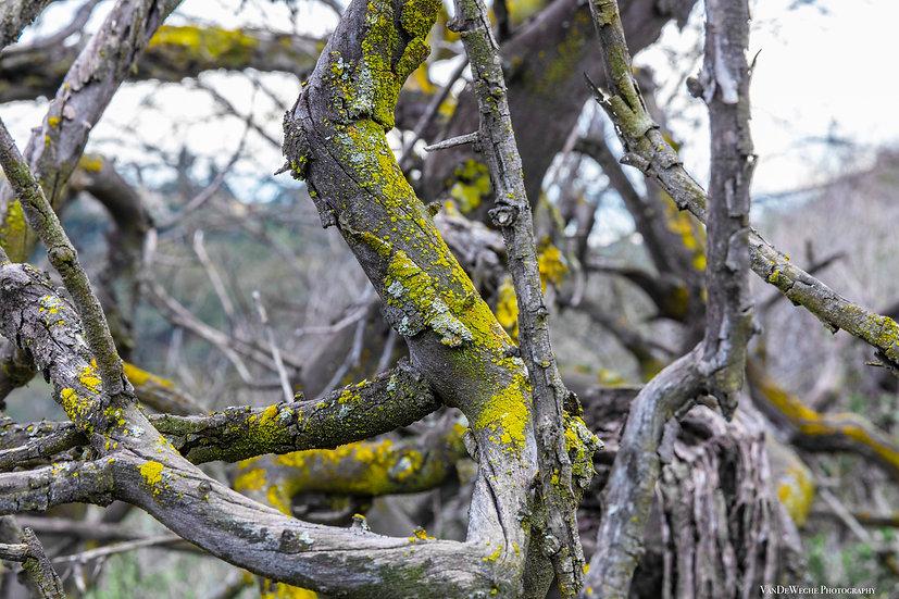 Mossy Dead Tree