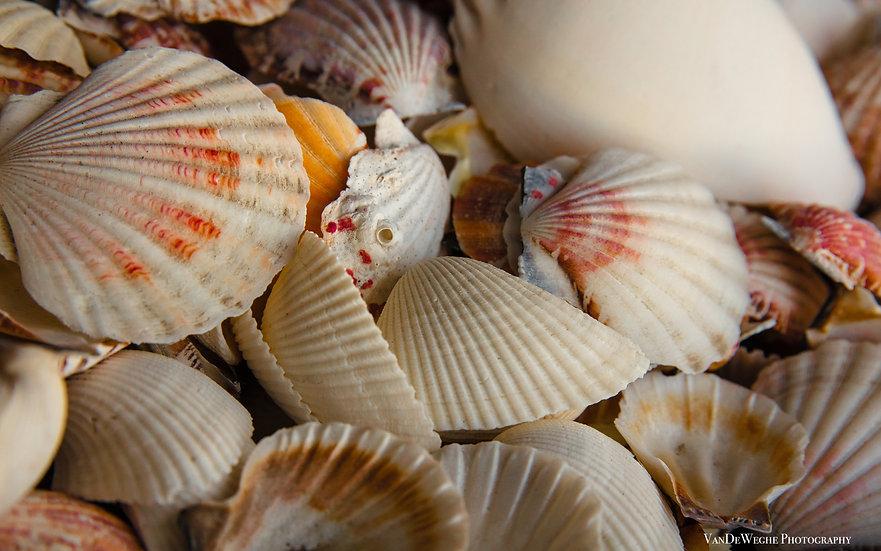 Shell Gathering